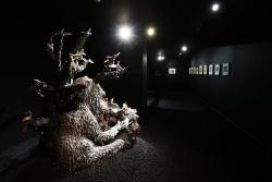 mocquet-musee-chasse-nature-2017-13-54df48e7a83da728ffae866510e1f4ce